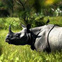 Tour To World Famous One Horned Rhinoceros Home - Guwahati - Golaghat