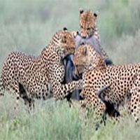 6 Days, 5 Nights Mount Kenya - Aberdares - Samburu - Shaba - Lake Elementaita
