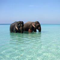 Mystic Andaman Tour