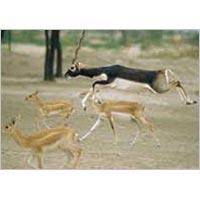 Wildlife Sanctuaries in Rajasthan Tour