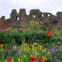 Amberd fortress - Saghmosavank - Haghpat-Sanahin - Odzun - Kobayr Tour