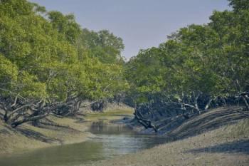 Exciting Sundarban Tour