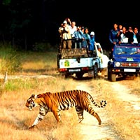 Corbett National Park Tour Packages