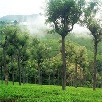 Ooty Packages - 1 Night and 2 Days