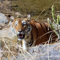 Wildlife Tour in Assam