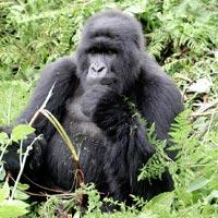 Uganda Gorilla Tour - 3 Days