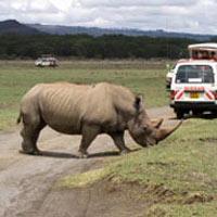 4 Days Masai Mara and Lake Nakuru Camping Joining Sa...