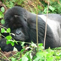 9 Days Gorillas In Bwindi, Wildlife In Murchison, Chimps In Kibale, And Wildlife-Queen Elizabeth N T