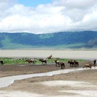 14-Day Uganda & Tanzania Combined Luxury Safari Tour