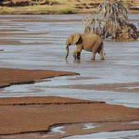 Kenya Safari Adventure Tour