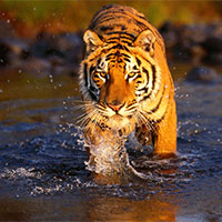 Wildlife Safari Tour Chitwan