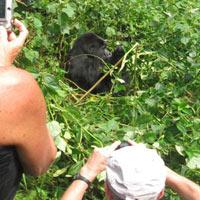 Uganda Gorilla and Chimp Tracking Adventure Tour