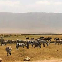Ngorongoro Day Trip Tour