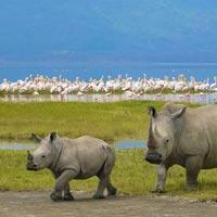 Tarangire/ Lake Manyara/ Ngorongoro Crater Tour