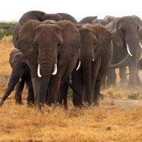 Camping Safari: ( Manyara,Ngorongoro & Serengeti ) Tour