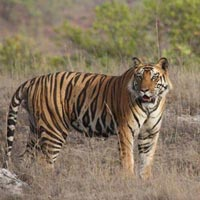 The Land of Tiger - Madhya Pradesh Tour
