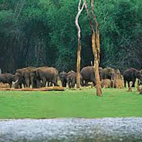 Thekkady 3 Days/ 2 Nights Tour