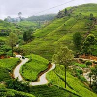 Visiting Kandy - Nuwara Eliya - Colombo Tour