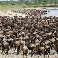 Kenya & Tanzania Special Tour 2014
