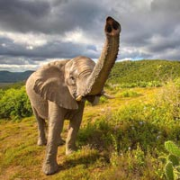 South Africa Splendour Tour