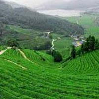 9D/8N  Gangtok - Darjeeling Package