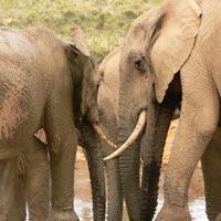 6 Days Nairobi - Amboseli - Nakuru - Maasai Mara Tour