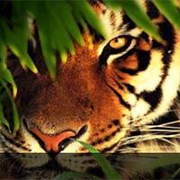 Sundarban Tour..