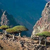 Sana'A - Socotra - Hadiboo - Dihamry - Ras Ersel - Erher Tour