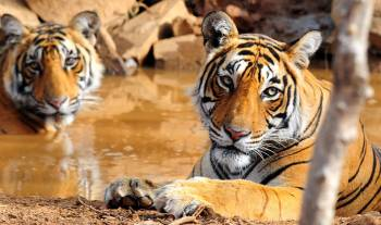 Golden Triangle with Wild Life Tour