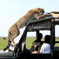 Camping Safaris Tour