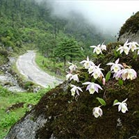 North Sikkim Tour - 3 Days.