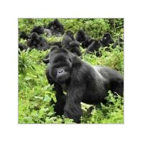 Uganda Gorilla Trekking And Wildlife Safari