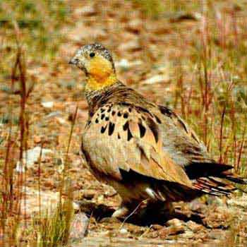 Birding and Wildlife Tour to Tsokar Lake