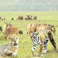 Jimcorbett With Nainital Package