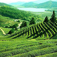 Mystical Flavors of North-East India (Summer Packages) (5N/6D)