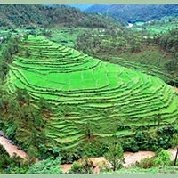 Kausani (2 Nights & 3 Days) Tour