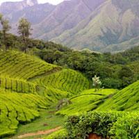 Kerala - Munnar - Thekkady - Cochin Tour