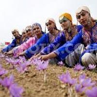 Enchanting Kashmir Tour