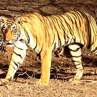 Golden Triangle & Ranthmore Tiger Tour