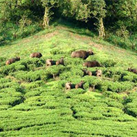 Weekend Packages - Magic Meghamalai 1Night/2Days