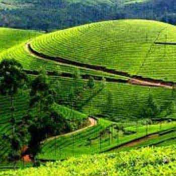 Ex Bangalore-Mysore-Ooty-Kodai Tour