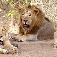 Best of Gujarat with Wildlife