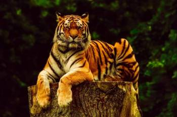 8 Days Golden Triangle Plus Tiger Tour Package