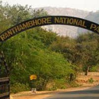 Ranthambore Jungle Safari