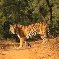 Wilderness of Madhya Pradesh Tour