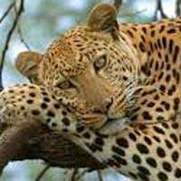 Wildlife of Uttarakhand Tour
