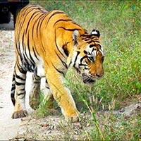 Madhya Pradesh - Wild Life - Kanha Tour