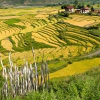 Paro valley - Thimphu - Punakha - Gangtey valley Tour