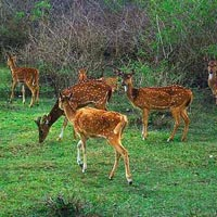 Bandipur and Ooty Tour Special