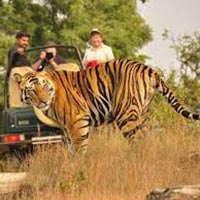 Jungle Safari Bandhavgarh National Park Package